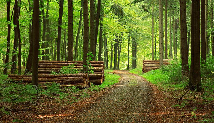 Профессиональный перевод в сфере лесоводства